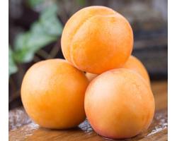 大黄杏 杏子 酸甜金太阳 当季新鲜水果 5斤
