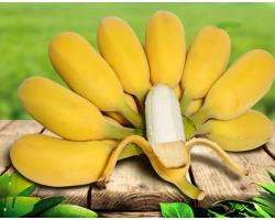 苹果蕉 广东香蕉 粉蕉 小米蕉 芭蕉 新鲜水果 5斤装