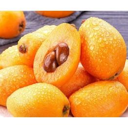 枇杷新鲜枇杷果水果当季